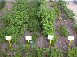 Medicinal Plant Cultivation Services, Capacity / Size: 1, Tamilnadu