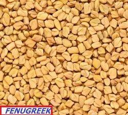 Yellow Indian Fenugreek Seeds
