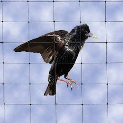 Anti Bird Net Services
