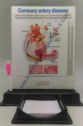 Anatomical One Slide Write And Wipe with Cheat Pad Stand and Marker Pen