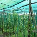 Farm Shade Net