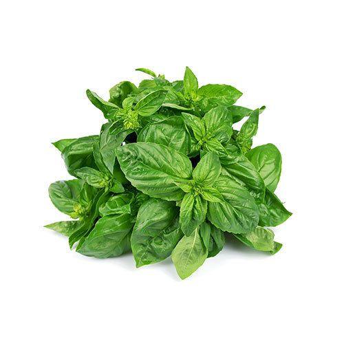 Holy Basil Leaf Oil