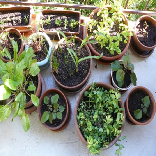 List Of Indian Herbs
