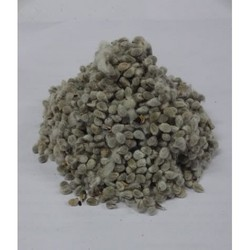 Indian Cotton Seed
