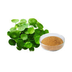 Bacopa Monneiri Herbal Extracts