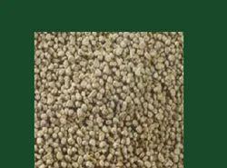 Bajra Millet Seeds