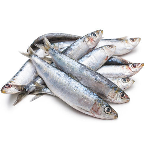 Indian Sardine Fish