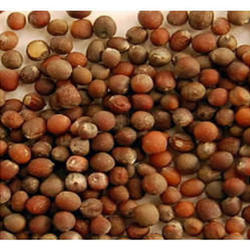 Cauliflower Seed, Packaging: 1-10 kg
