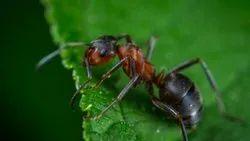 Bee Commercial Garden Pest Control Service