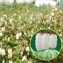 Dried Hybrid Cotton Seeds, For Agriculture, 10 Kg
