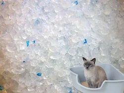 Silica Gel Cat Litter