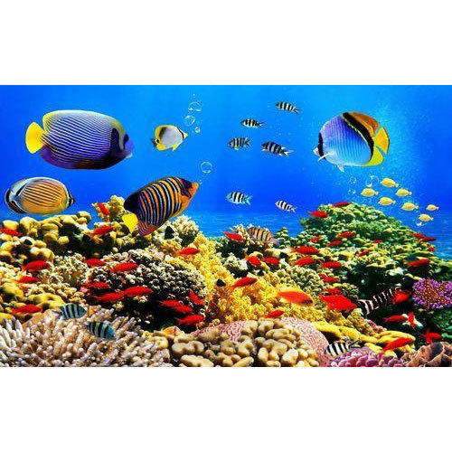 3D Fish Wallpaper At Rs 80 /square Feet