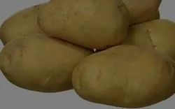 Cold Storage A Grade Potato, Packaging Size: 50 kg