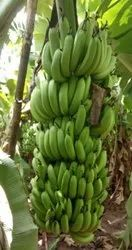 A Grade Green Banana, Packaging Size: 20 Kg, Packaging Type: Crate
