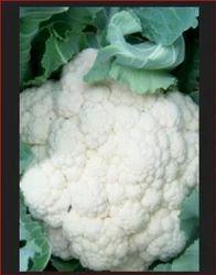 Ajeet - Ace Hybrid Cauliflower Seeds