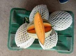 Vijay F-1 Hybrid Muskmelon Seeds