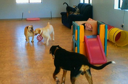 Pet Day Care Service