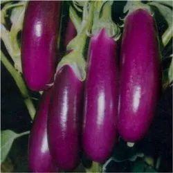 Purple Brinjal Seeds