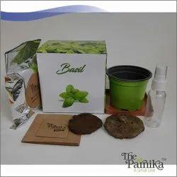 THE PARNIKA  Basil Plant