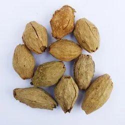 Malabar Neem Seeds