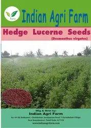 Hedge Lucerne / Velimasal / Desmanthus