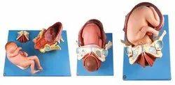 Child Birth Demonstration Model