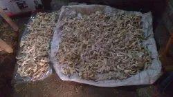 West Bengal Dry Oyster Mushroom, Packaging Type: Plastic Bag, Packaging Size: 5 Kg