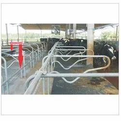 Cow Farm Cubicles