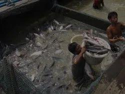 Aquaculture Farm Management Services