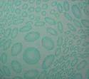 P101 Non Woven Metallic Printed Fabric