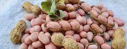Raw Java Peanuts, Packaging Type: Jute bag