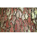 Pink Bark Extract