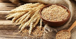 Seedsone Natural Wheat Seeds, For Agriculture, Packaging Type: PP Bag
