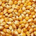 65 Kg Yellow Raw Maize, Gluten Free