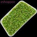 Eshoppee 1kg Green Color Glass Seed Beads 8/0