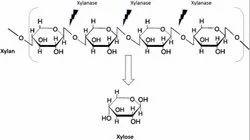 Xylanase Food Enzyme