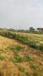 Farming Land For Sale At Nimuchana Alwar Rajasthan