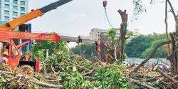 Trees Transplantation Services