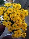 Yellow Hybrid Chrysthnam Fresh Flower Bunch