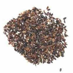 Casuarina Seeds