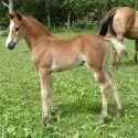 Foal Starter Feed
