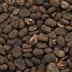 Babchi Oil - Bakuchi - Bauchi - Psoralia corylifolia