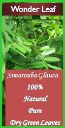 Simarouba Glauca Green Dried Leaves Powder