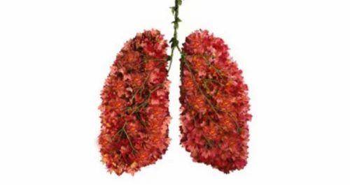 Lung Transplant Services, मेडिकल सर्जरी सेवाएं in