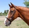 Grooming Horse Halters