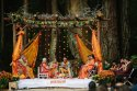 Destination Wedding In Jungle, India