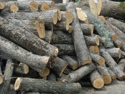 industrial Firewood Supplier india