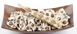 Moringa Seed, For For Healthier