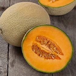 Melons Cold Storage Rental Service