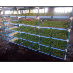 Hydroponic Fodder Machine